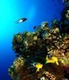 15. Medjunarodni Festival podvodnog filma